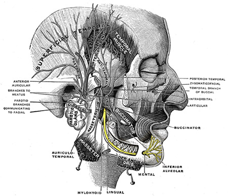 inferior alveolar and mental nerve